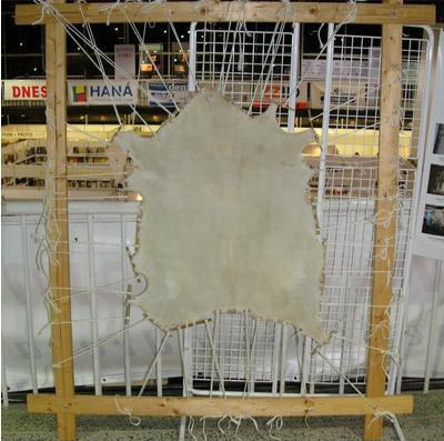 Pergament din piele de capra (etapa in procesul de fabricare)